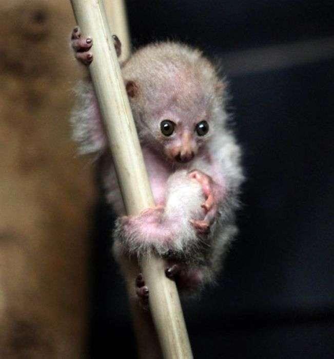 Порятунок тварин, як сенс життя (24 фото)