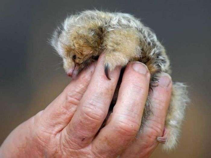 Екзотичні звірята-малюки (40 фото)