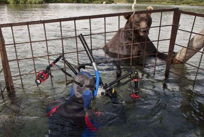 Як роблять небезпечні знімки тварин (4 фото)