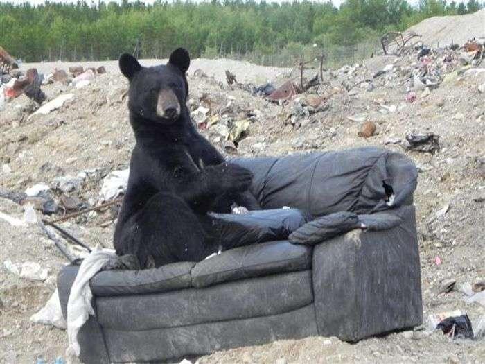 Новий власник старого дивана (3 фото)