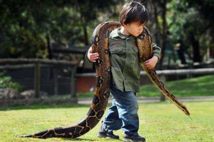 Незвичайні друзі дворічного хлопчика (11 фото)