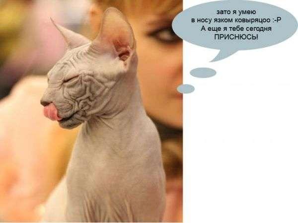 Цікаве пояснення котячих звичок (6 фото)