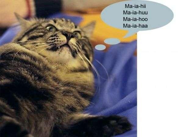 Про що думають коти на виставках (27 фото)
