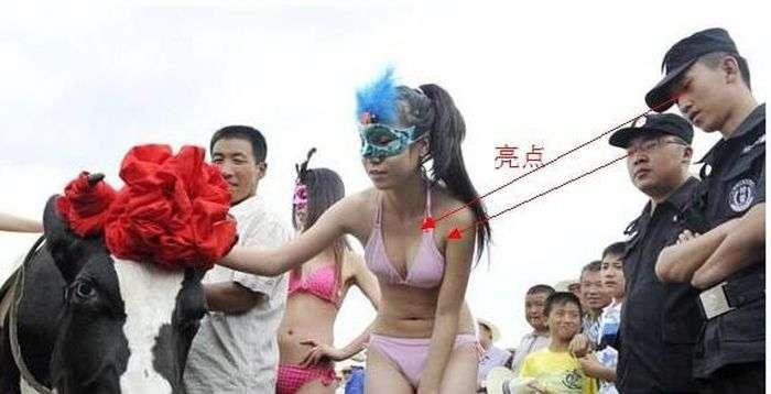 Дивний китайський конкурс Міс дійна корова (11 фото)