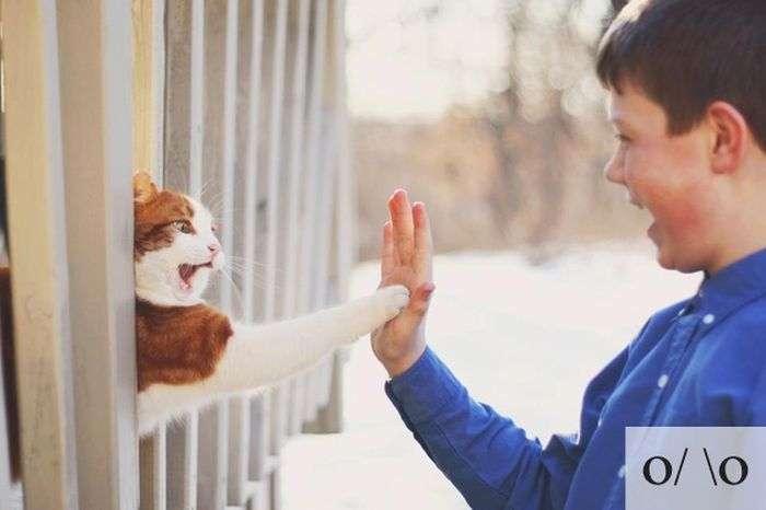 Забавні емоції прикольних котів (23 фото)