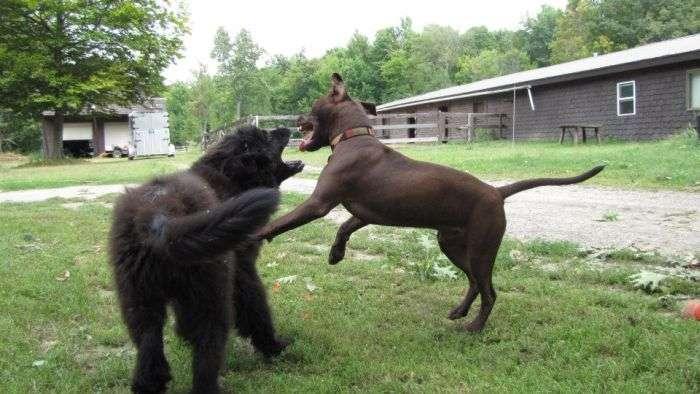 Жорстка бійка (12 фото)