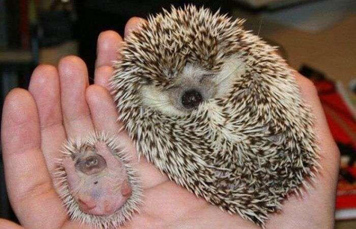 Мініатюрні копії тварин (37 фото)