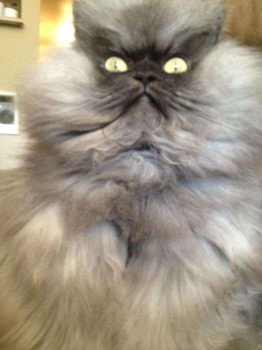 Найсуворіший коте в світі (28 фото)