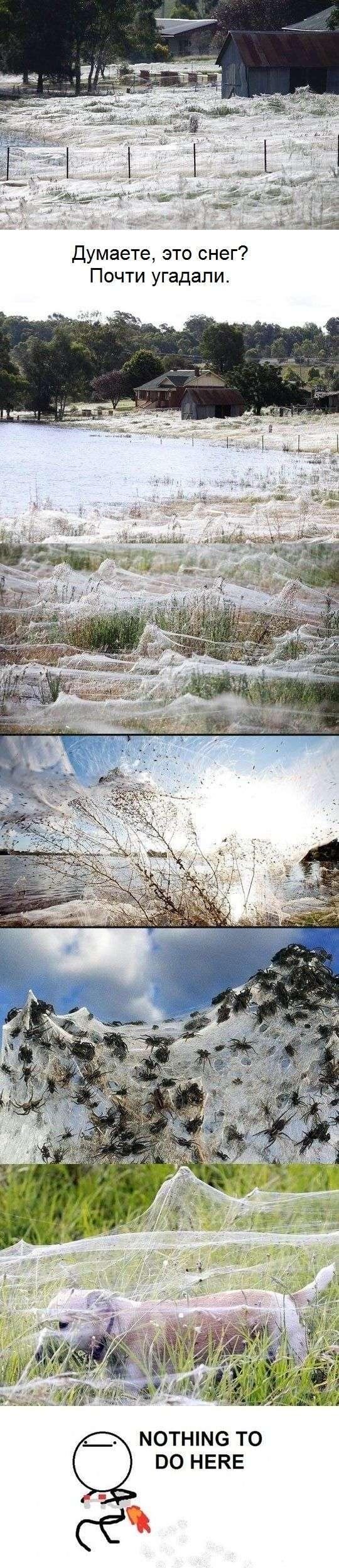 Прикольні картинки (101 фото)