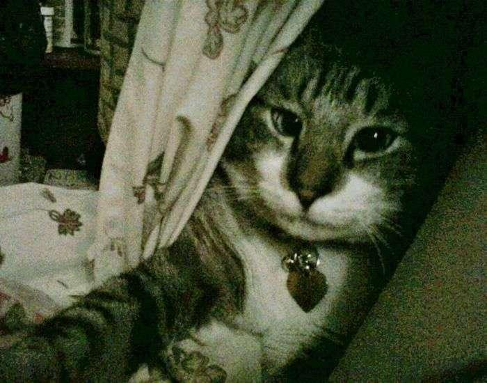 Кіт, над яким всі глузують (22 фото)