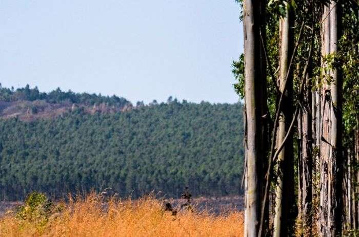 Дика природа (118 фото)